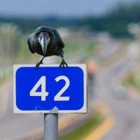 Чёрный ворон :: Анатолий Клепешнёв