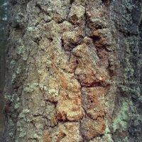 1. Текстури лісу. (Текстуры леса) :: Сергей Ходор