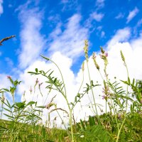 Красота Алтайских трав! :: Юлия Пахомова