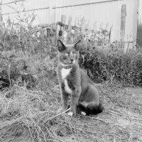 серый кот :: Юлия Закопайло