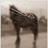 Мокрый конь :: Кай-8 (Ярослав) Забелин