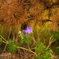 цветы под высохшею елью :: Александр Абакумов