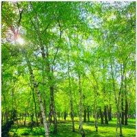 Парк в солнечных лучах... :: Тамара (st.tamara)