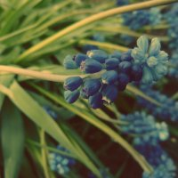 Цветы :: Angelina Veshkelskaya