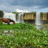 Водопад и лошадка :: Сергей Анисимов
