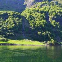 Лето в зелёном :: Ольга