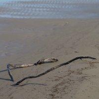 На берегу Обской губы. :: Mc!! .....