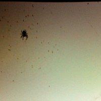 павучок :: Halyna Hnativ