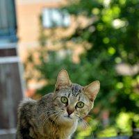 Кот. Соседский ..)) :: Маry ...