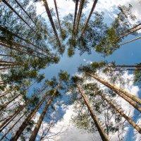 Тяга к небу.... :: Валерий Клинин
