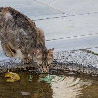 Стамбульские кошки :: ssv9 ...