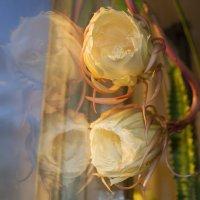 С отражением в стекле.. :: Марина