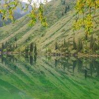 Озеро Кольсай :: Максим Зайцев