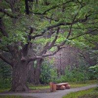 В старом парке :: Сергей Фомичев