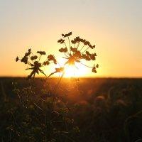 Закат в деревенском поле! :: Кирилл Чернавин