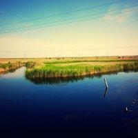 Речка тихая моя... :: Августина Ли