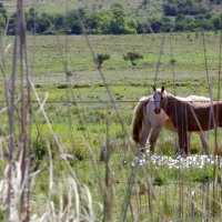 Лошади на природе :: Maria Malysheva Ortiz