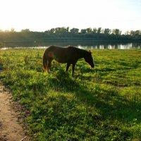 Вечером на реке :: Валерий Судачок