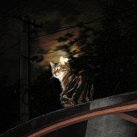 Луна и кошка :: Александр Корчемный