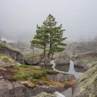 туман :: Дамир Белоколенко