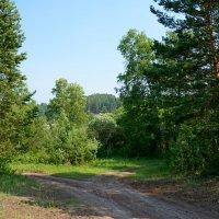 Лесные дорожки :: Ольга