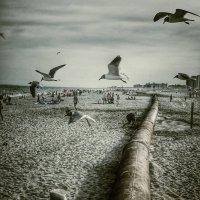Seagulls :: Игорь Гринивецкий