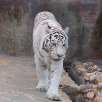 Московский зоопарк :: Татьяна Котова