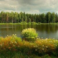 Лесное озеро :: Александр Яковлев
