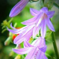 Цветы :: Ольга Исакова