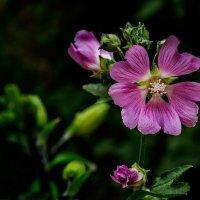 Цветок у дома :: Владимир Горубин