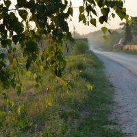 Июньское утро... :: mv12345 элиан
