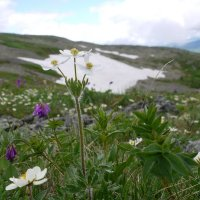 На Каракольских озерах :: Cветлана Шагако