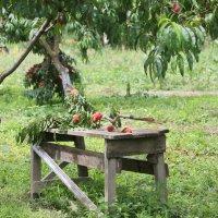 В саду :: Нина Сигаева