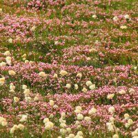 тундра летом :: евгений Смоленцев