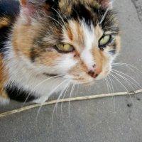 Монастырская кошка :: Milocs Морозова Людмила