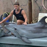 Разговор двух дельфинов :: Константин Жирнов