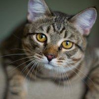 Эмоции моего кота :: Николай Николаенко