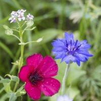 цветы :: Ильсия Рахматуллина