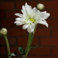Белый :: Helen Dark