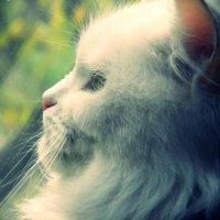Кошка :: Alina Volenyuk