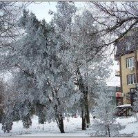 Из зимнего.2014г. :: Ирина Прохорченко