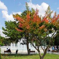 Дерево :: Лена Михайленко