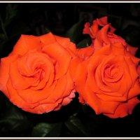 Розы в ночи :: Татьяна Пальчикова