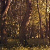 "Закрученный лес" :: Наталья ***