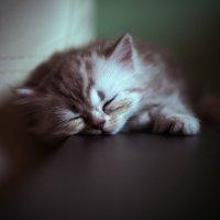 спящий ангелочек :: Антон Лихач