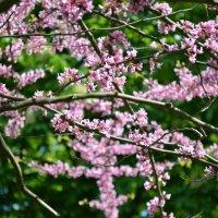 Весна в парке им.Пушкина :: Леся Орлова