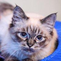 Кошечка :: Наталия Снигирёва
