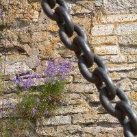 На крепостной стене :: валерия