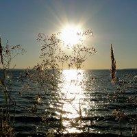 Качим и солнце :: Елена Шемякина
