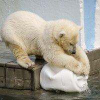 Новосибирский зоопарк. Шилка. Моя игрушка! :: Татьяна Степанова